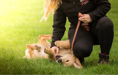 Puppy care 1