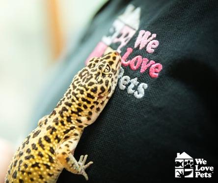 We Love Pets leopard gecko