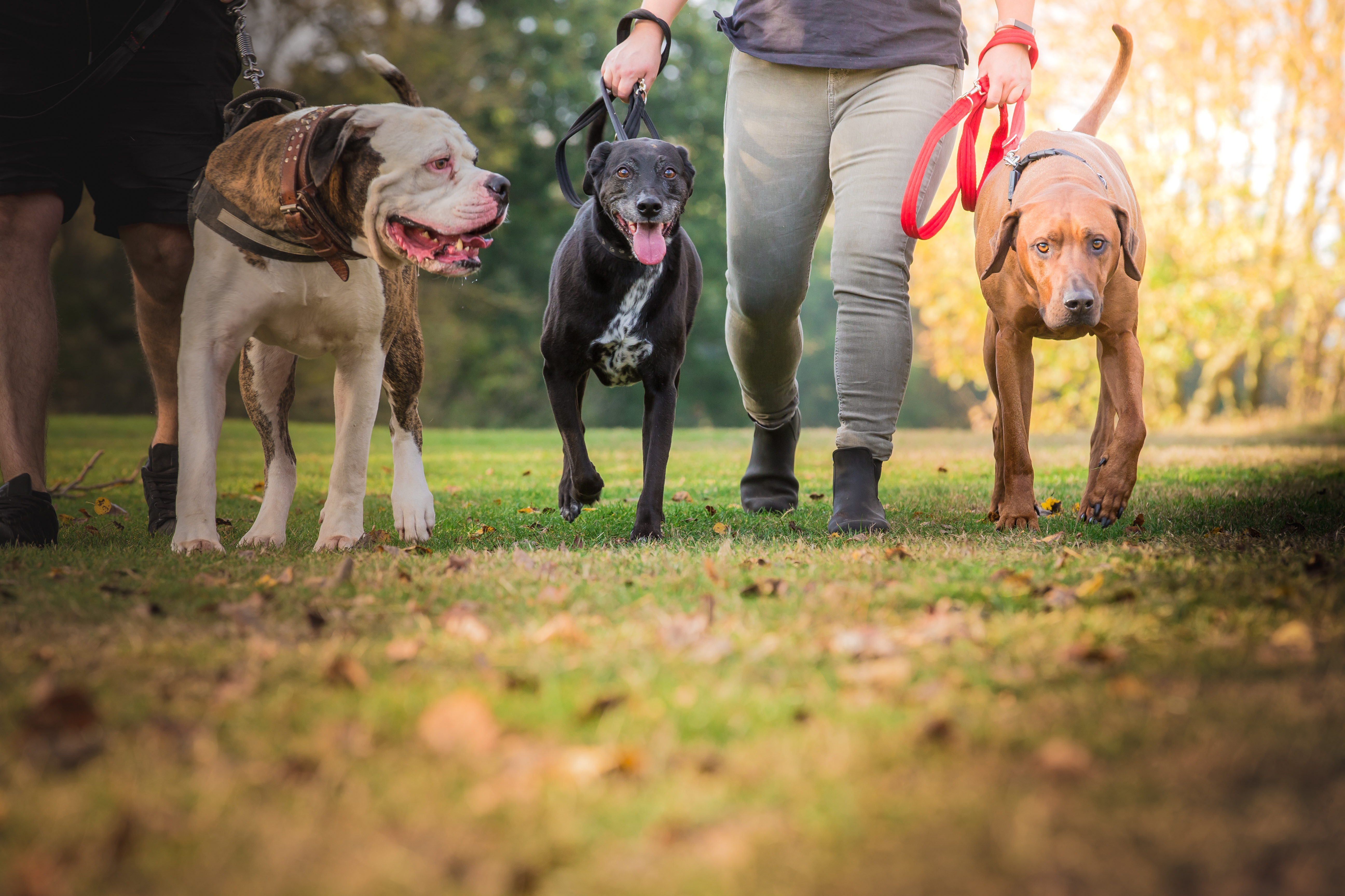 how to choose a dog walker