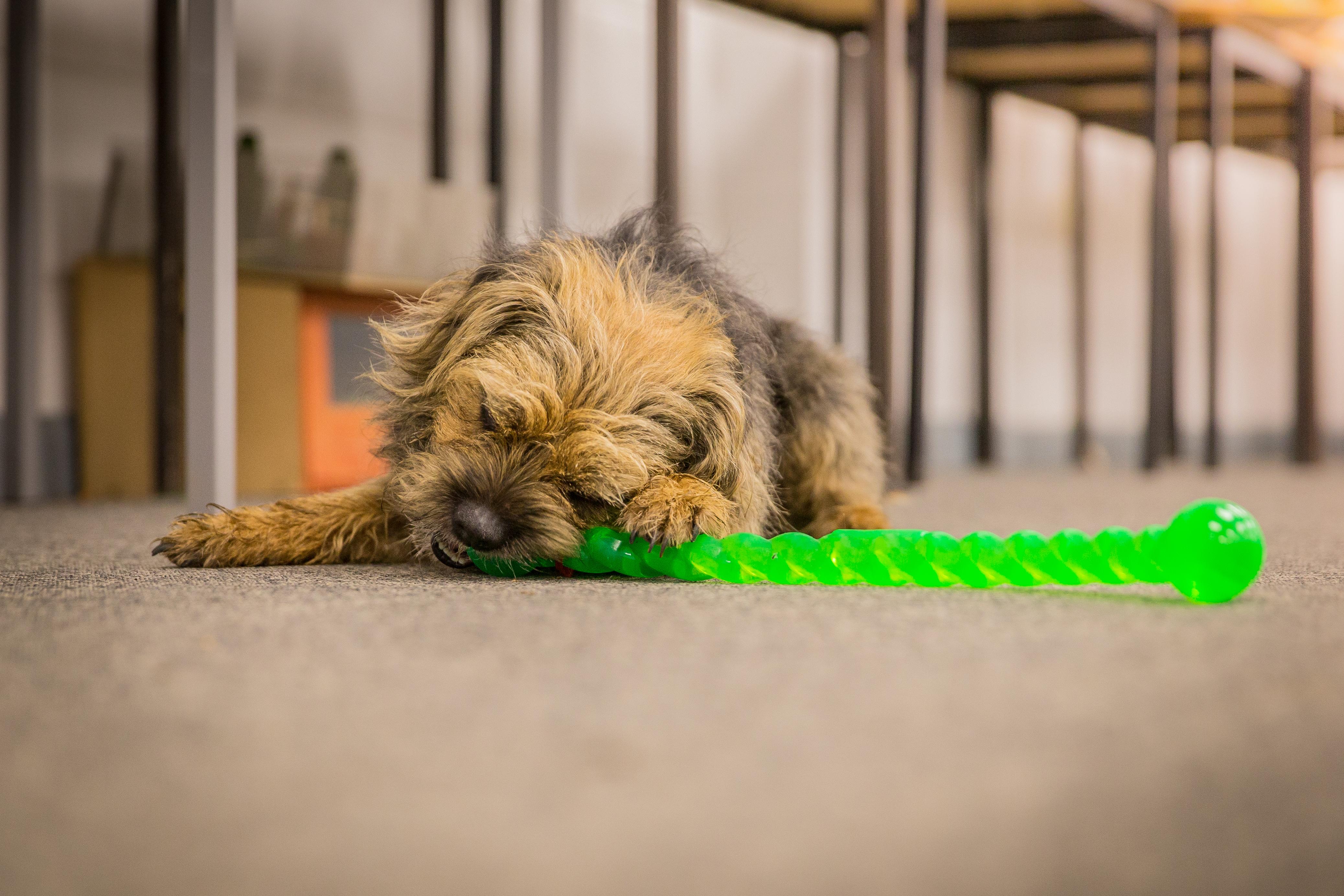 dogs in schools