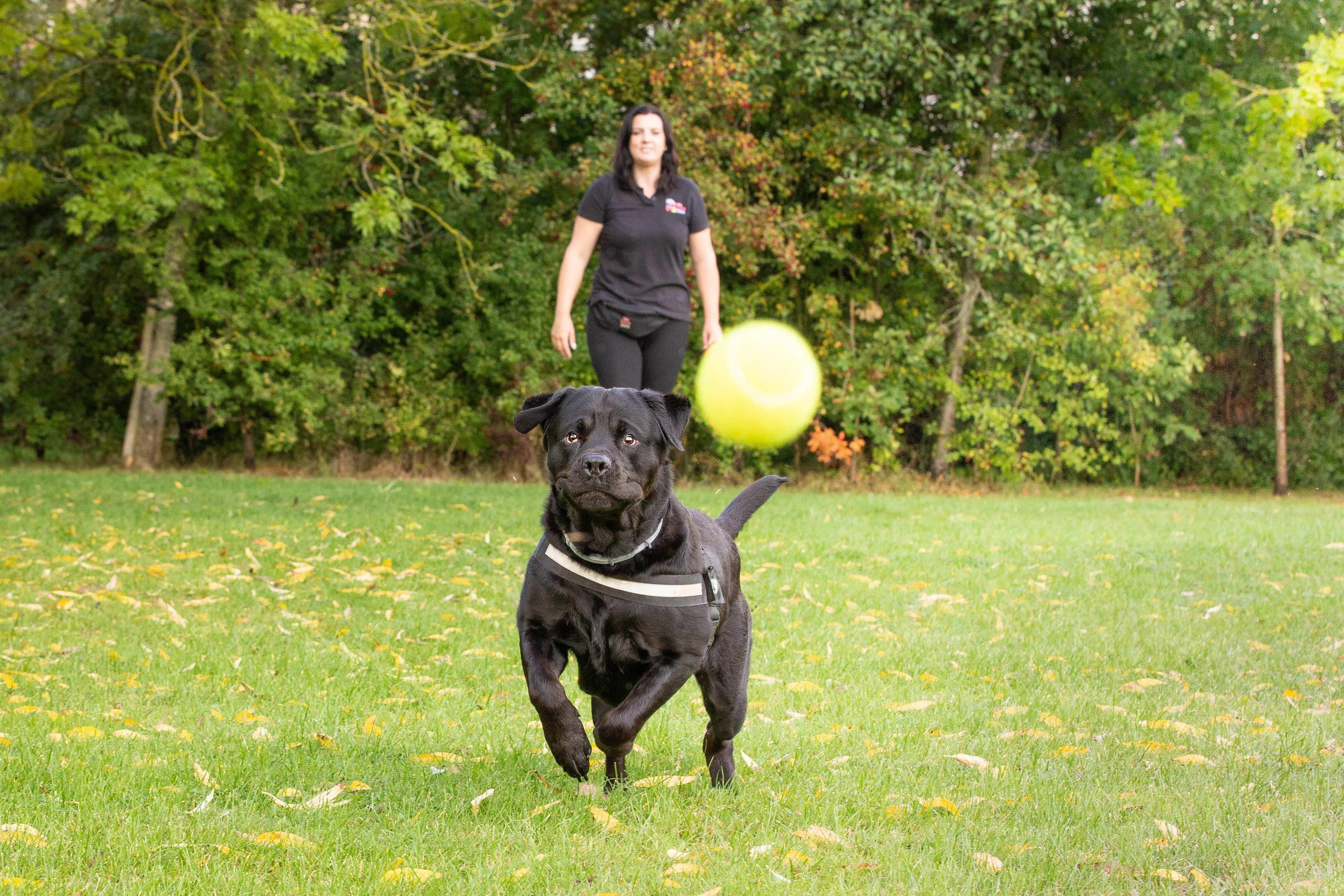 Dog walker and pet sitter in Wotton-under-Edge. Multi award winning We Love Pets.