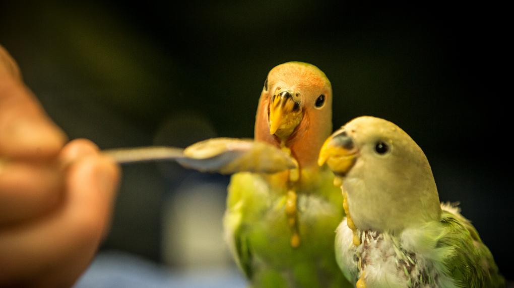 https://f.hubspotusercontent10.net/hubfs/6436018/Bird%20slider.png