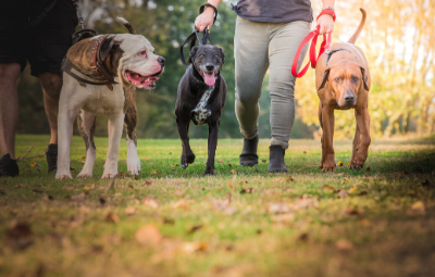 Dog socialisation