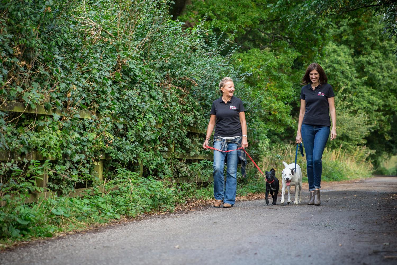 Professional and loving dog walking and pet sitting in Farnham. Multi award winning We Love Pets.
