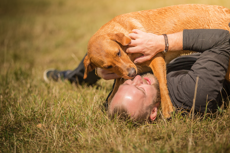 Dog walker and pet sitter for Swansea. Multi award winning We Love Pets.