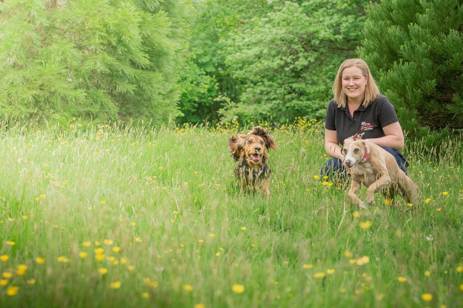 We offer dog walking, dog visits and puppy care in Solihull