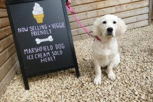 Ice cream for dogs in the UK