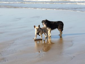 Ogmore by sea beach dog friendly in South Wales