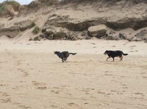 Formby beach, Liverpool dog friendly all year