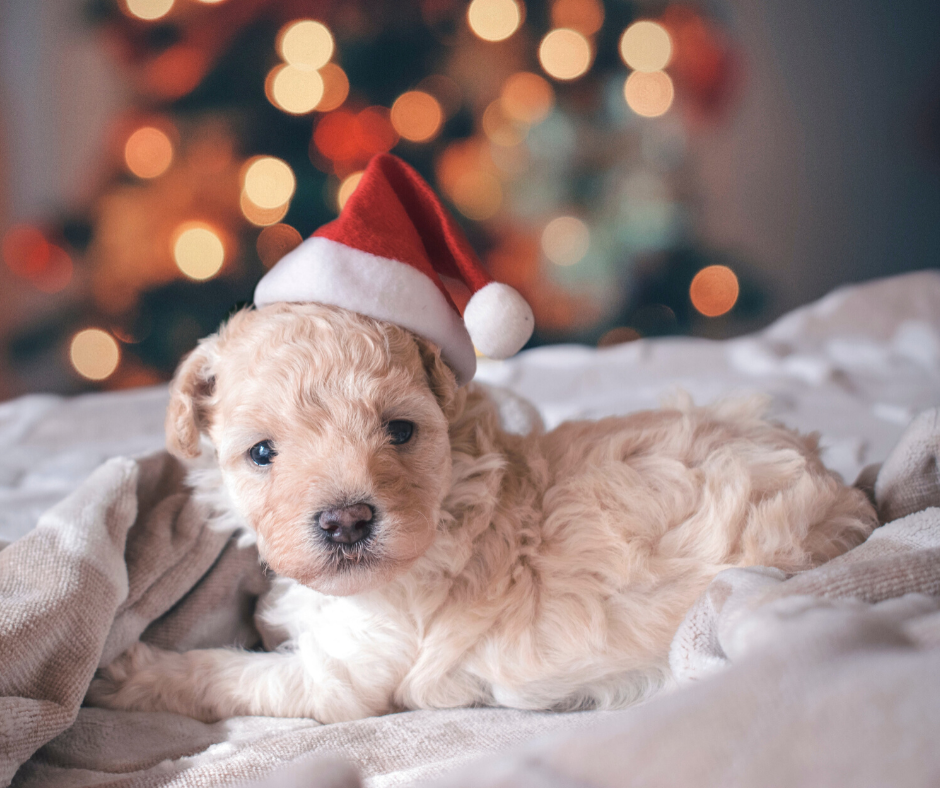 christmas pet gift guide