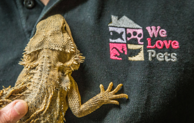 Bearded dragon care We Love Pets