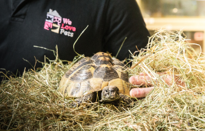 Tortoise care We Love Pets