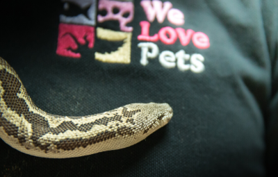 Snake care We Love Pets