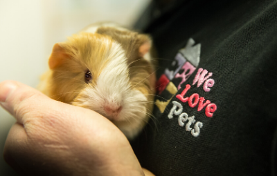 Best small animal care near me