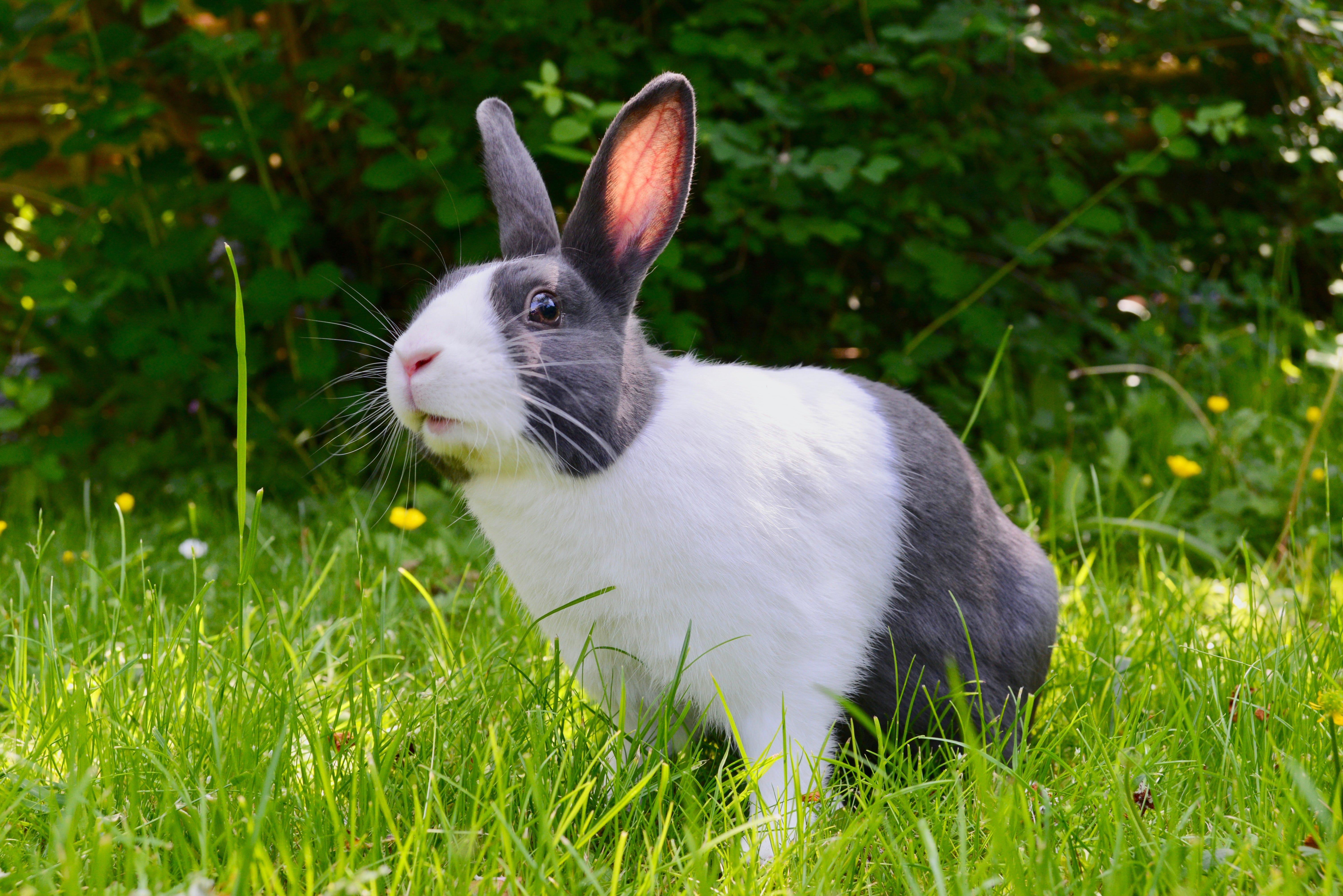 https://f.hubspotusercontent10.net/hubfs/6436018/bunny%20blog.jpg