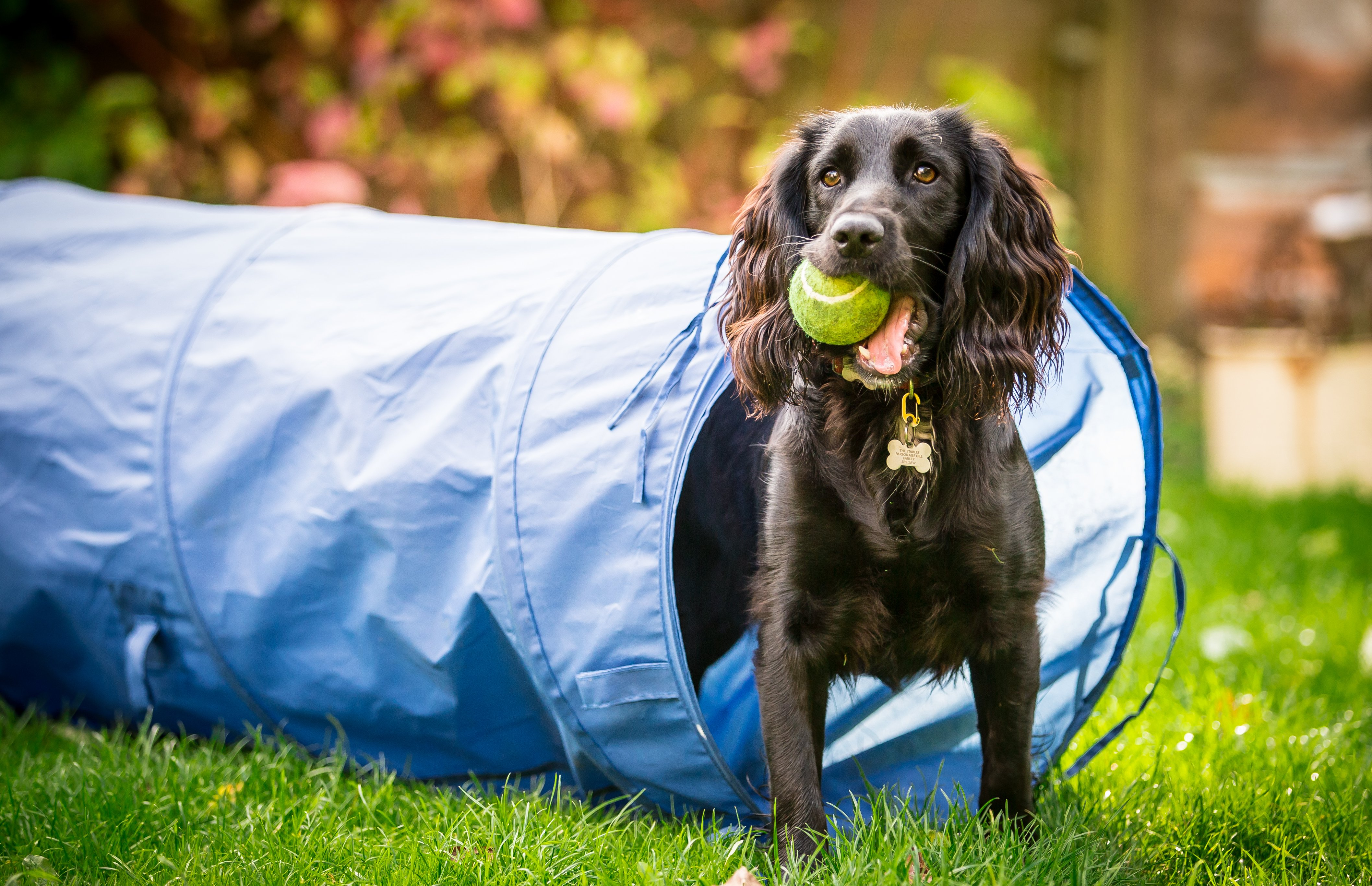 we love pets dog training tips