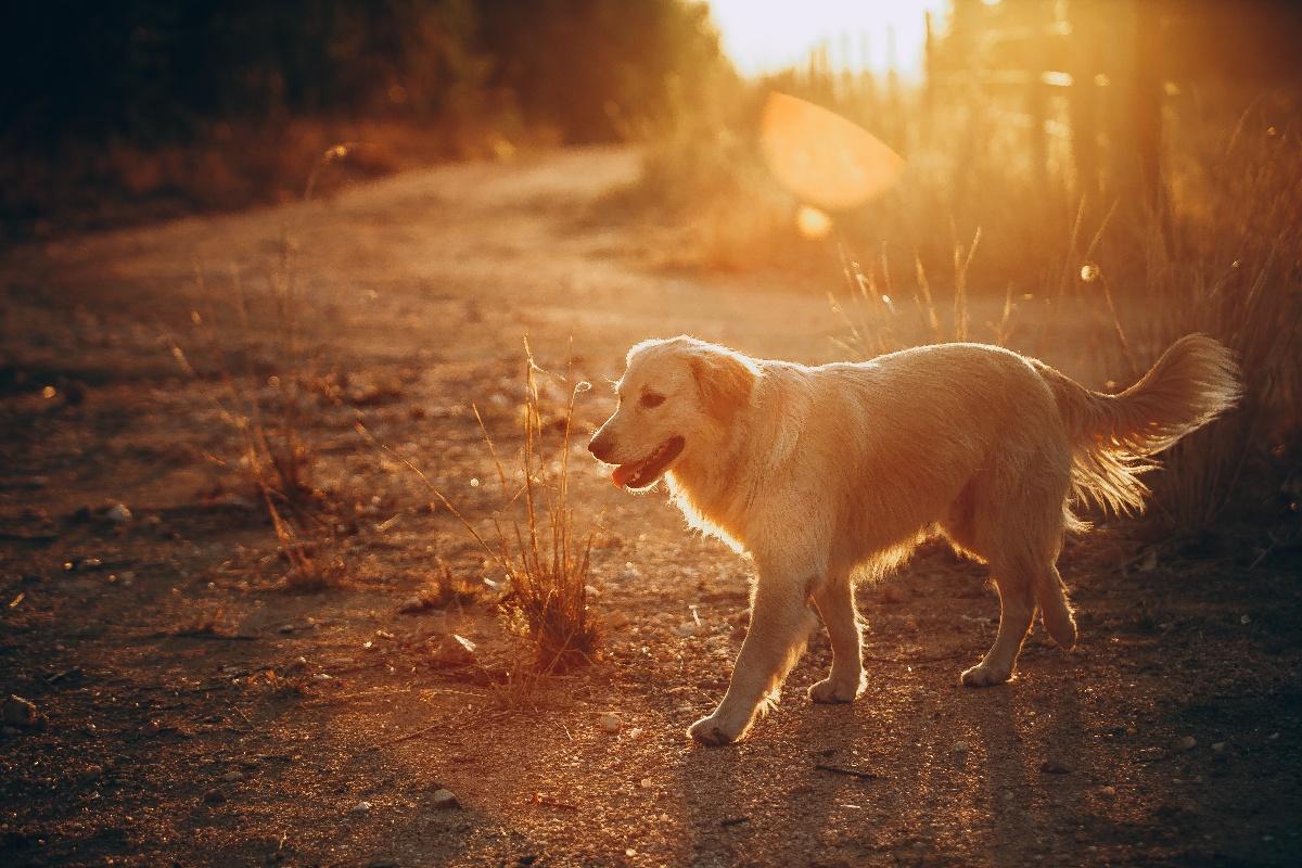 dog winter sunset